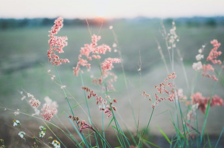 Gras in pink